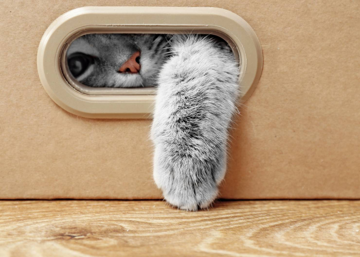 Endoscopen voor katten